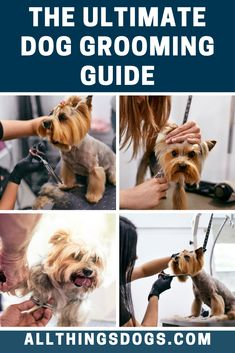 Not only is bathing a vital part of grooming Fido, brushing is too, as is checking their eyes, ears and nails. Read our complete dog grooming guide to ensure you're taking care of Fido in the best way possible. Homemade Dog Shampoo, Deep Cleansing Shampoo, Dog Pants, Dead Hair, Organic Shampoo, Terrier Breeds, Brushing, Dog Care, Dog Grooming