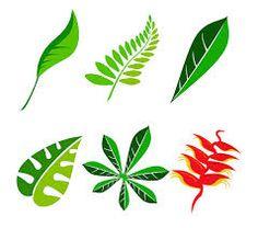 plant - Google 검색
