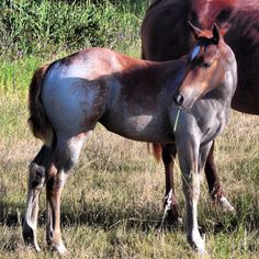 2013 Photo Contest Entry -Little Red Roan (Bosque County) - Photo by Vickie Mitchell - find out more about us:  www.texastravelblog.us