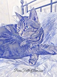 Caturday Art Old Photo Effects, International Cat Day, Photo Editor Free, Pen Art, Animal Paintings, Art Blog, Old Photos, Animal Pictures, Canvas Prints