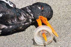 please be aware our trash affects the entire planet including wildlife #eco…