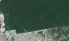 O verde das cidades brasileiras visto do espaço - Reserva Ducke - Manaus