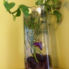 Root some plants and give a beta fish a home