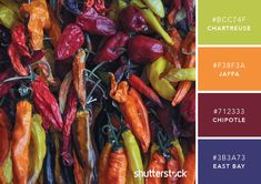 101 Color Combinations to Inspire Your Next Design – Hot Chili Color Palette
