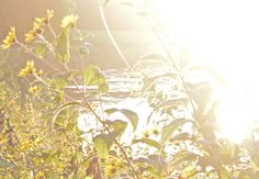 Ochtend zon in oktober