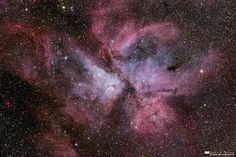 """""""The Flower of the Deep"""" by Will Vrbasso.Easy to photograph, but difficult to master, the great southern deep sky nebula of Carina. Being a very bright nebula, it is relatively straight forward to find and image - but all those pesky stars get in the way - millions of them."""