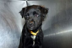 Jaz: Only five months old and out of time at high-kill upstate shelter