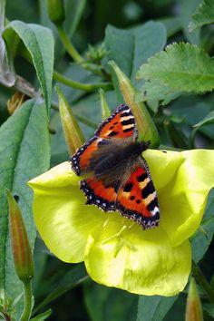 #butterflies