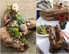 10 Cool Succulent Planter Ideas for Your Home 3