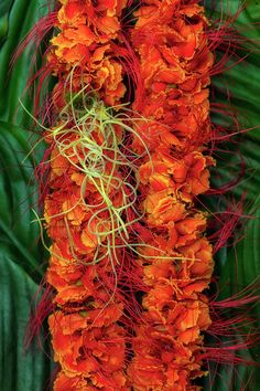 Ohai Ali'i, or royal ohai, adorned with a bit of Pele's hair. I love the vibrant orange of the hairy blossoms set against a background of deep green leaves. Flower Lei, Leis, Hula, Green Leaves, Hawaiian, Flower Arrangements, Jade, Island, Plants