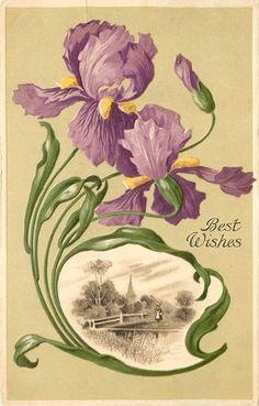 1907 Art Greetings Postcard Art Nouveau Irises Country Vignette Best Wishes | eBay
