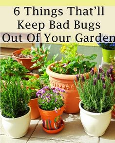 Alternative Gardning: 6 Things To Keep Bad Bugs Out Of Your Garden