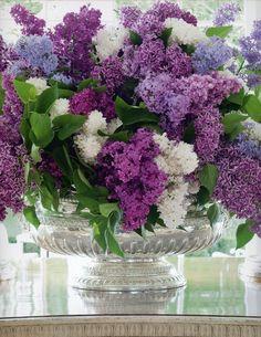Magnifique bouquet de Lilas tricolore