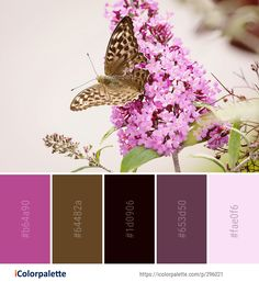 Color Palette Ideas from Butterfly Moths And Butterflies Flower Image Purple Color Palettes, Lilac Color, Butterfly Flowers, Colorful Flowers, Color Combinations, Color Schemes, Bedroom 2018, Find Color, Color Charts