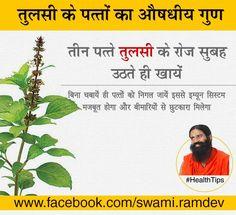 Medicinal properties of basil plant #Health Tips