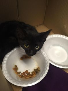 When a tiny stray kitten showed up at an office in Florida, the employees worked together to help him feel comfortable. He went from being scaredy to comfortably chowing down his first meal offered by his human friends.  	 Photo: OccamsCudgel 	They spotted a tiny black kitten at their office and res...