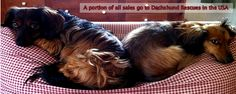 I love Dachshunds shop.com    A portion of all sales go to Dachshund Rescues in the USA