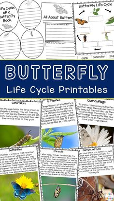 This Life Cycle of a Butterfly Printable Pack is a great learning resource for homeschooling or to dive deeper into studying all about butterflies! Educational Activities For Toddlers, Science Experiments For Preschoolers, Nature Activities, Outdoor Activities For Kids, Science For Kids, Preschool Activities, Fun Projects For Kids, Butterfly Life Cycle, Life Cycles