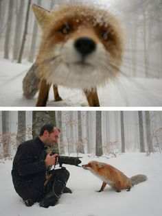 Fox Close Up - Pictures That Reveal The Truth Behind Photography
