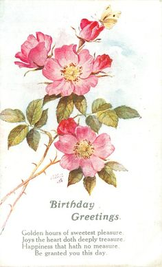 BIRTHDAY GREETINGS   sprigs of  wild rose