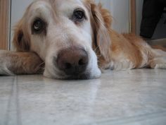 Is your pup getting old?