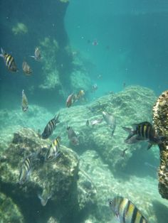 Playa del Carmen - Things To Do - Sightseeing - Private Coba Tour - Tour Image 09