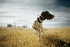 Dogs Are the Ultimate Outdoor Companions   Outdoor Skills   OutsideOnline.com