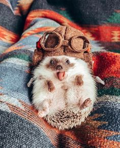 Baby Animals Super Cute, Cute Little Animals, Cute Funny Animals, Cutest Animals, Cutest Pets, Baby Animals Pictures, Cute Animal Photos, Funny Animal Pictures, Hedgehog Pet