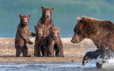Фото милых сцен из жизни медведей