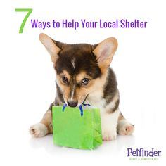 Adoption isn't the only way to show your love to shelter animals. If you're not ready for a pet of your own, donate time, talents, supplies and more to your local shelter. Read our 7 favorite ways to help!