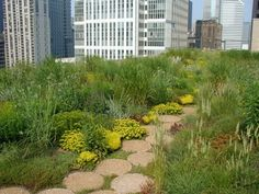 How Chicago Ignited the Explosion of Green Roofs in America. Pictured: Chicago City Hall Green Roof