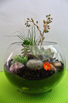My very first terrarium Succulent Terrarium, Decor, Vegetable Gardening, Gardening, Succulents, Plants, Glass Vase, Flower Vases, Decoration