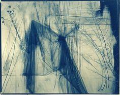 "Lauren Semivan<br /> <em>May, </em>2011<br /> Cyanotype, contact print from original negative<br /> 8 x 10""  Edition of 10"