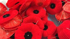 5 things you should know about poppy etiquette for Remembrance Day: List of things you should know when wearing Remembrance Day poppy (CBC News 10 November Have A Day, A Day To Remember, Red Poppies, Red Flowers, Remembrance Day Poppy, Some Gave All, The 11th Hour, Living In North Carolina, Day Off Work