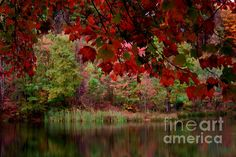 Beautiful Fall Reflected In The Still Waters