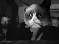 Grumpy Cat Tard has a better expression for this clap gif than Orson Welles did. Even though Grumpy Cat is a madam. Grumpy Cat Gif, Grumpy Cat Humor, Grump Cat, Gif Animé, Animated Gif, Funny Cat Videos, Funny Cats, Applause Gif, The Bloodhound Gang