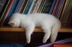 Lezen is vermoeiend - imagem & foto de Linda van Gils de gatos - fotografia . - so cute ♡ - Animais Pretty Cats, Beautiful Cats, Animals Beautiful, Beautiful Pictures, Baby Animals, Funny Animals, Cute Animals, I Love Cats, Crazy Cats