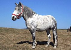 Google Image Result for http://www.theequinest.com/images/altai-horse-5.jpg
