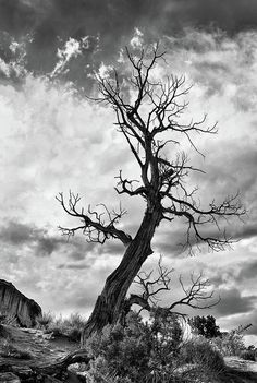 Twisted Tree Art Print featuring the photograph Twisted Tree by Art Cole