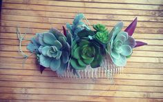Sucker for succulents Flowerkincreations