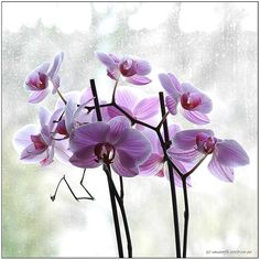 Orchids my favorite flower <3