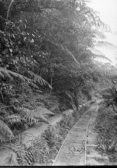 The pipeline at the Nihotupu Reservoir. James D Richardson, 1919, Sir George Grey Special Collections, ref. 4-1669, Auckland Libraries. Pinned from Timespanner: A trip on the Rainforest Express