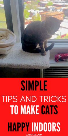 Cat Behavior Problems, Indoor Cats, Cat Exercise, Living With Cats, Support Dog, Cat Run, Cat Activity, Interactive Cat Toys, Super Cat