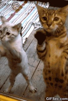 Official Website Of Cat Animals Giff #55310 - Funny Cat Giffs|Funny Giffs|Cat Giffs