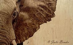 """Out of Nowhere (african elephant) by julie bender Pyrography ~ 15"""" x 22"""""""