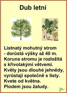 Flora, School, Garden, Plants, Autism, Jar, Garten, Lawn And Garden, Gardens