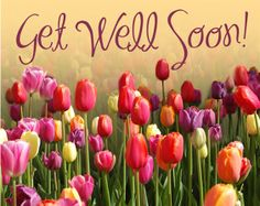 GET WELL WISHES TO THE DUTCH in OTHER TOPICS Forum