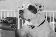 Carla Christiani - Pet - Fotografia Pet - Cães de grande porte.