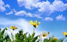 Daisy Flower Meaning Flower Meaning Frühling Wallpaper, Hd Flower Wallpaper, Spring Flowers Wallpaper, Wallpaper Gallery, Nature Wallpaper, Dogwood Flowers, Flowers Nature, Daisy Flowers, Daisy Flower Meaning