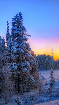 sunset, winter, trees, landscape